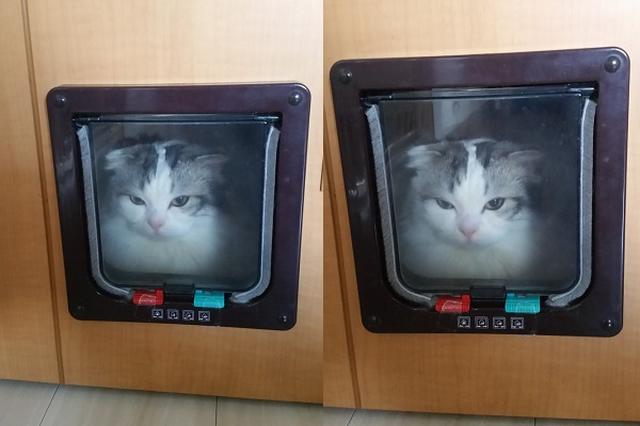 画像: 「キャットドア」の入り方が分からないニャンコの表情がめっちゃ切ない