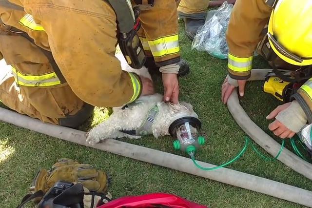 画像: ペットの命を助けるため、2人の少女が27万円を出して送った酸素吸入器が命を救う