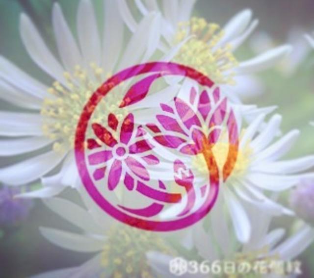画像: SNSで話題!自分の誕生日の「花家紋」を調べられるアプリがとても素敵♡