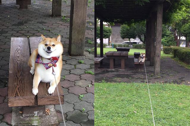 画像: 「やだ!帰りたくない!」お気に入りの公園で、帰宅を全力で拒否する柴犬