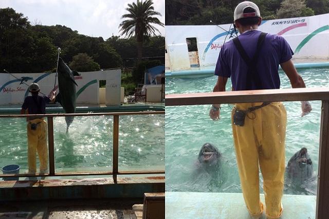 画像: イルカショーを間近に見られる!レトロすぎる水族館「犬吠埼マリンパーク」が話題に
