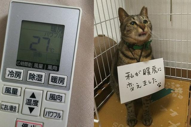 画像: お風呂から上がると冷房が暖房に...可愛い犯人に2万いいね!