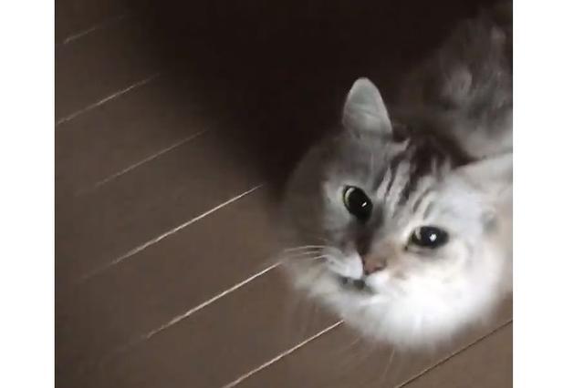 画像: 猫なのに「わんわん」と鳴くニャンコが可愛い!
