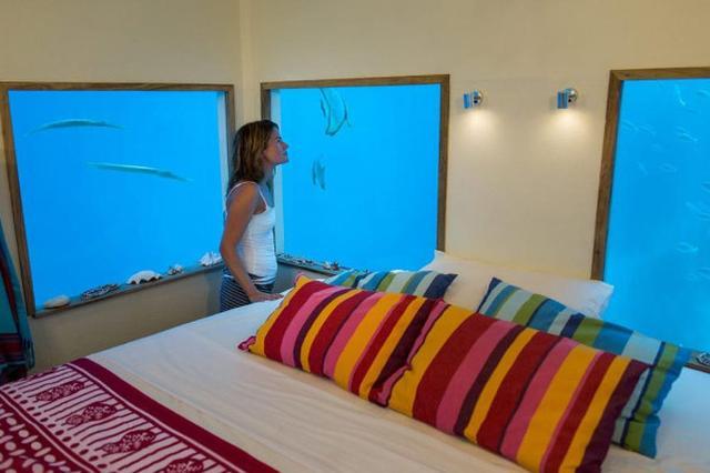 """画像: 窓の外には魚たち......海の中に客室を作った""""海中ホテル""""1泊16万円"""