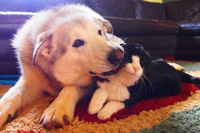 画像: 親友の猫を亡くした犬の悲しみを癒したのは、4匹の子猫だった