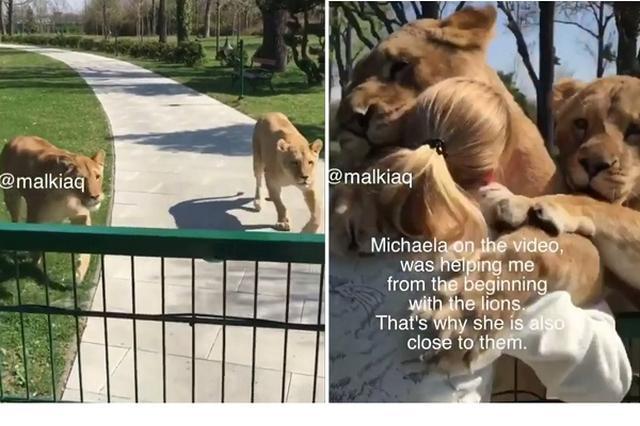 画像: 懐いた女性に全力でハグするライオン2頭が怖い&かわいい