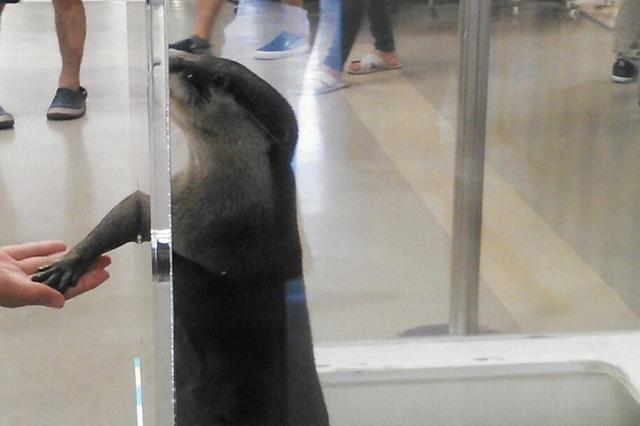 画像: 神対応に胸キュン!カワウソと握手ができる水族館が話題