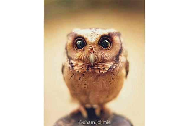 画像: まんまるお目目に引き込まれる!野生のフクロウの自然な表情をとらえた写真がインスタで話題