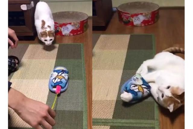 画像: 猫がスリッパに突撃した結果→まるで逮捕されたような状態にw