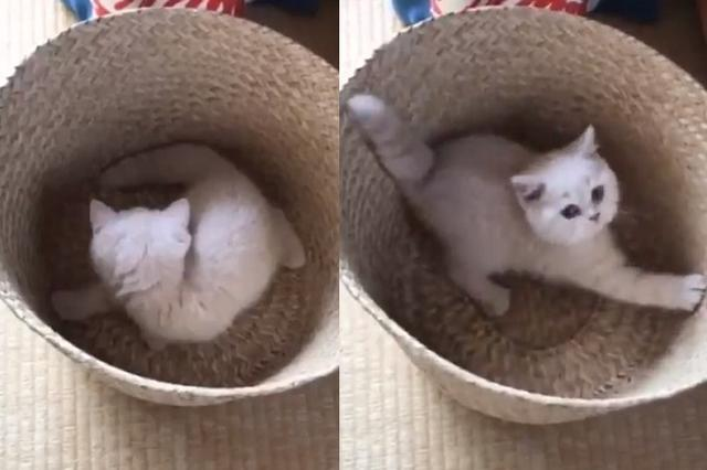 画像: 自分のしっぽの存在に気がついた子猫が可愛い!