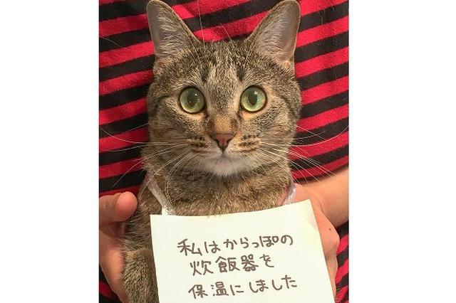 画像: 空っぽの炊飯器を「保温」にした猫、叱られるも可愛すぎて無罪にw