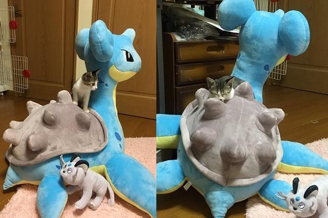 画像: ポケモンの巨大ぬいぐるみを買ったら...1番喜んだのは飼い猫だった!