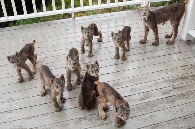 画像: 身近すぎる大自然...民家での怪しい物音の正体に12万いいね!