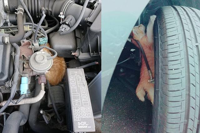 画像: 車に「猫バンバン」が必要な季節が到来!実例を伝える投稿が話題