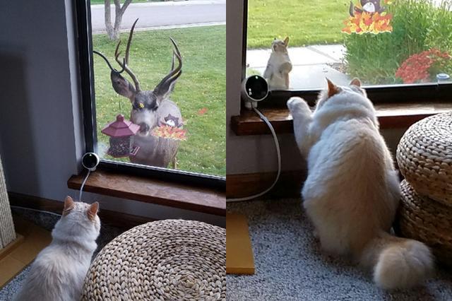 画像: いつ友達に?野生動物が次々とあいさつに訪れる飼い猫