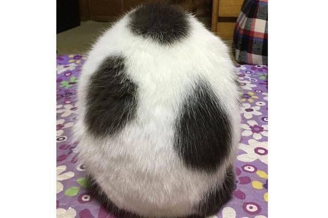 画像: 「ヨッシーのたまご」みたいな猫の後姿がめっちゃ可愛いw