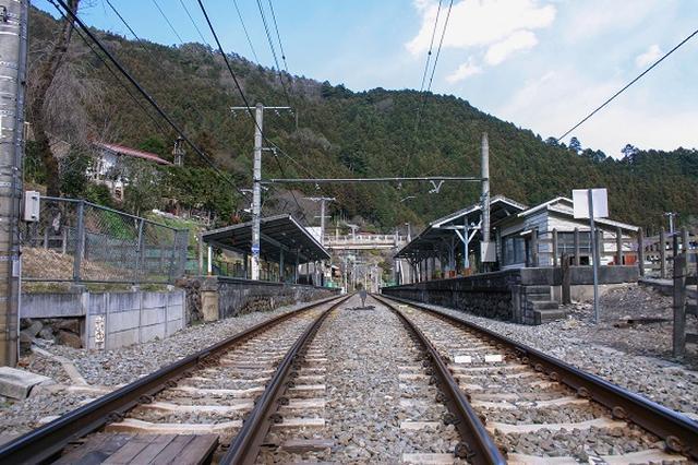 """画像: 「東京なのに?」JR青梅線と中央線が""""鹿の衝突""""で遅延し驚きの声"""