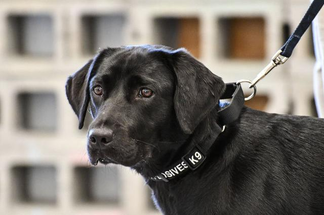 画像: CIAがある爆発物探知犬の訓練をやめた理由に称賛の声