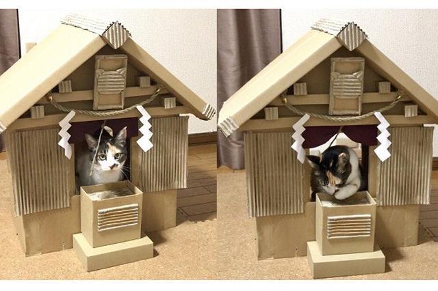画像: 御神体はお猫様!ご利益が多そうな「ダンボール神社」に胸キュン
