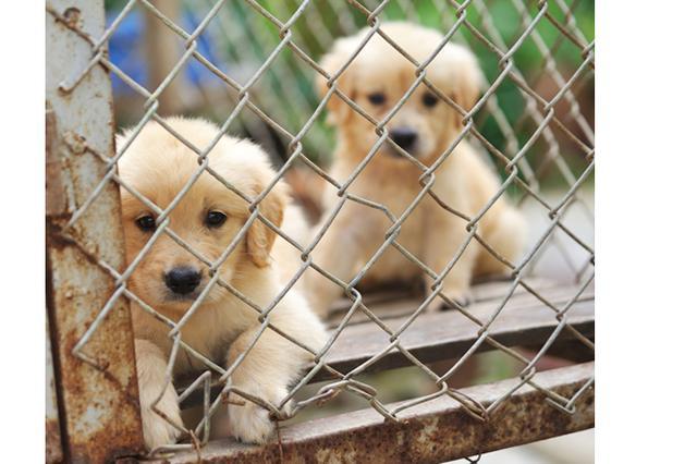 画像: カリフォルニア州で保護犬以外のペット販売を禁止する法案が成立!2019年から施行