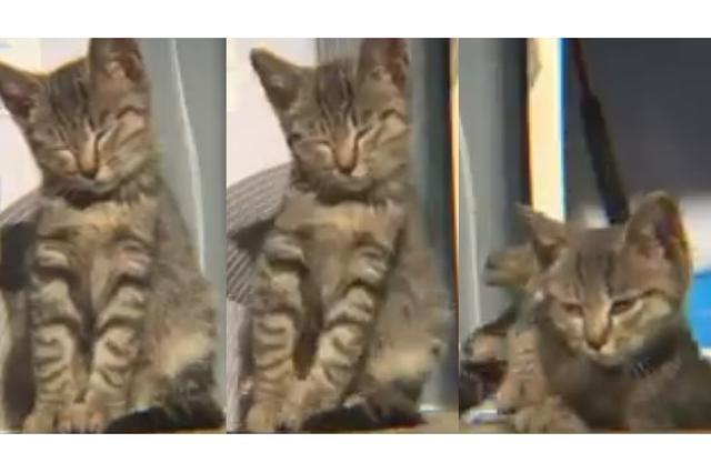 画像: ウトウト...コテッ!暖かい場所で睡魔と戦う子猫の動画に9万いいね!