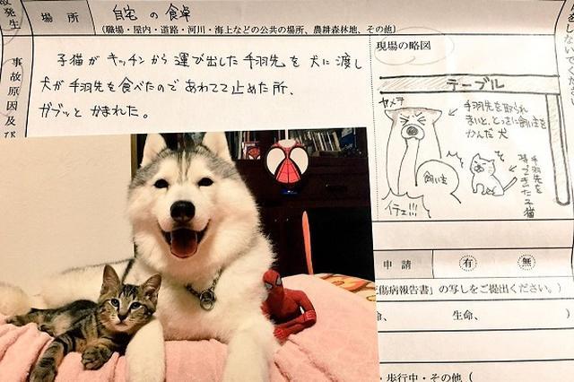 画像: 骨折の原因はこれ→「保険屋さんに提出した書類」に書かれた内容が笑えると話題に!