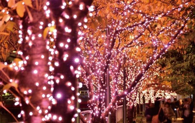 画像: 長さ2.2kmの桜色のトンネル♡「目黒川みんなのイルミネーション」が今年も開催!