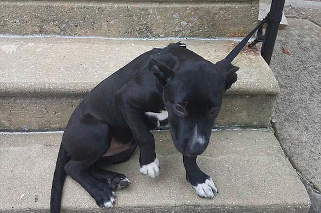 画像: 食べ残しのピザと捨てられた子犬、Facebookの投稿で3時間で里親が決まる
