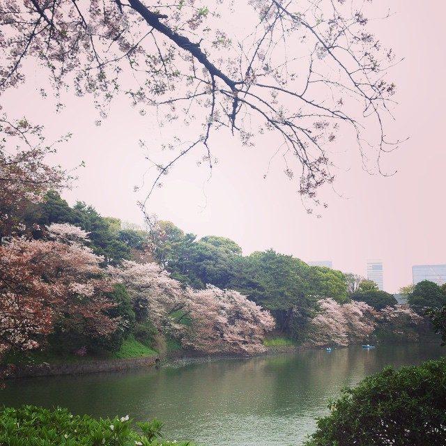 画像: お花見にゃぅ♡ last HANAMI!! Sakura so wonderful♡♡♡ #HANAMI #花見 #千鳥ヶ淵 #great instagram.com
