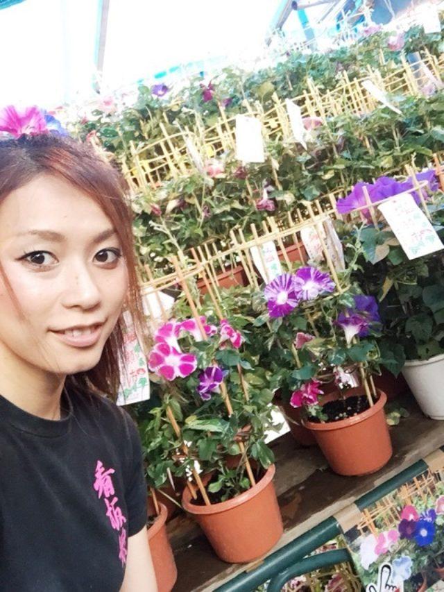 画像: ♡入谷あさがお市 & マシェバラHP♡