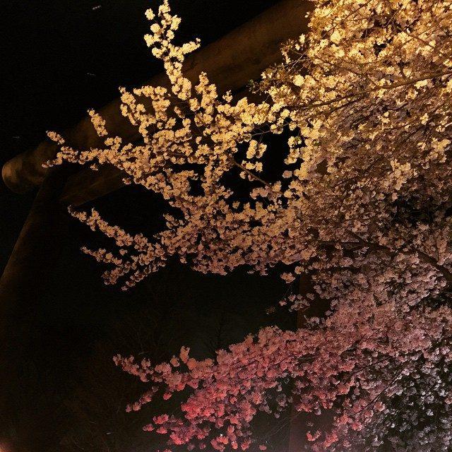 画像: 夜桜見物 #千鳥ヶ淵 #お花見 #桜 #夜桜 instagram.com