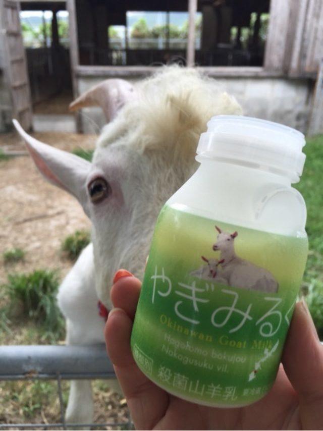 画像: 沖縄独自の食文化!山羊のはごろも牧場さん