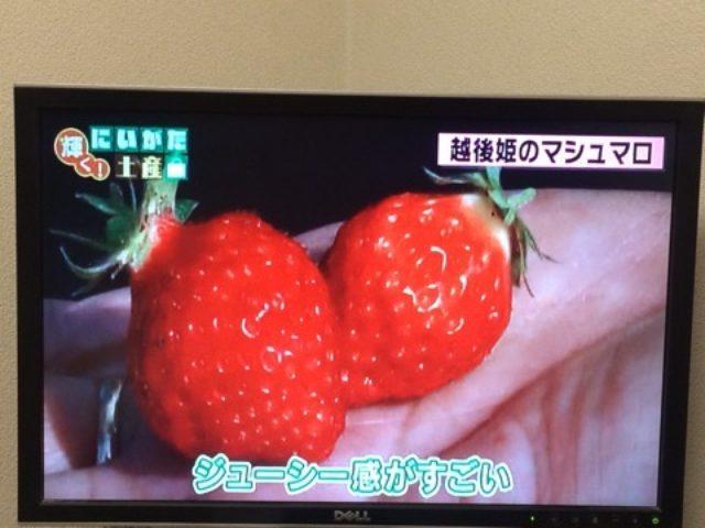 画像: 【新潟テレビ21出演】世界が認める'SAKE' @ ミラノ万博でも人気