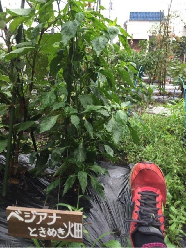 画像: 831野菜の日を前に畑で耕作ベジタブルランボルギーニ