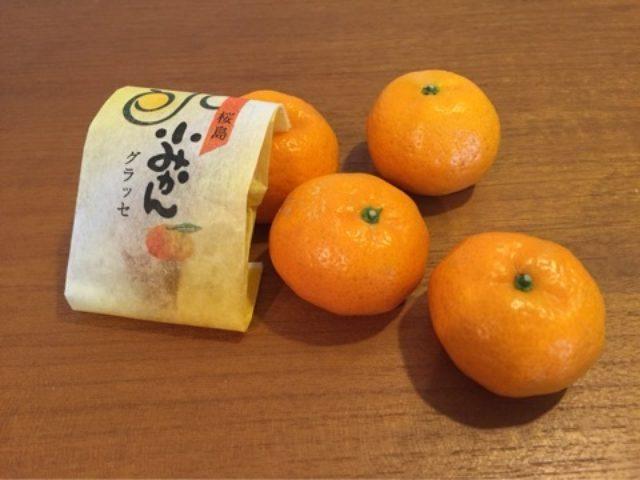 画像: 世界一大きな桜島だいこんと世界一小さな桜島 小みかん!