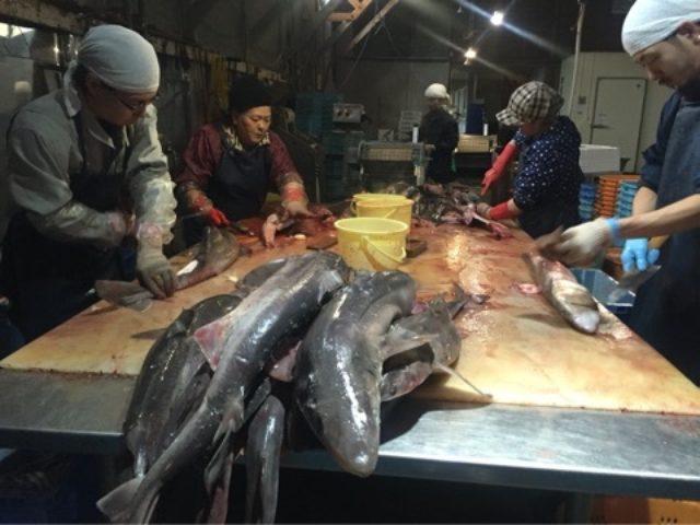 画像: サメ食文化の根付く青森でサメの可能性追求する田向商店
