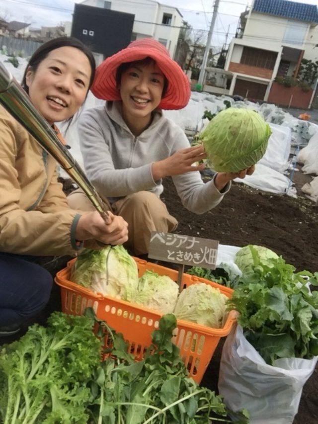 画像: 野菜畑の撤収でした〜〜ありがとう大地の力*\(^o^)/*