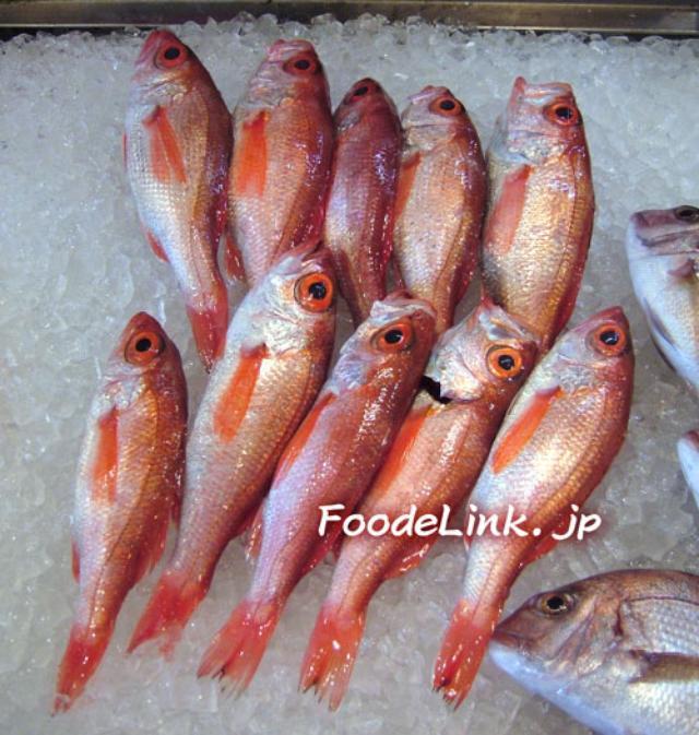 画像: 参照リンク「旬の魚貝百科」 アカムツ/ノドグロ/:旬の魚貝百科