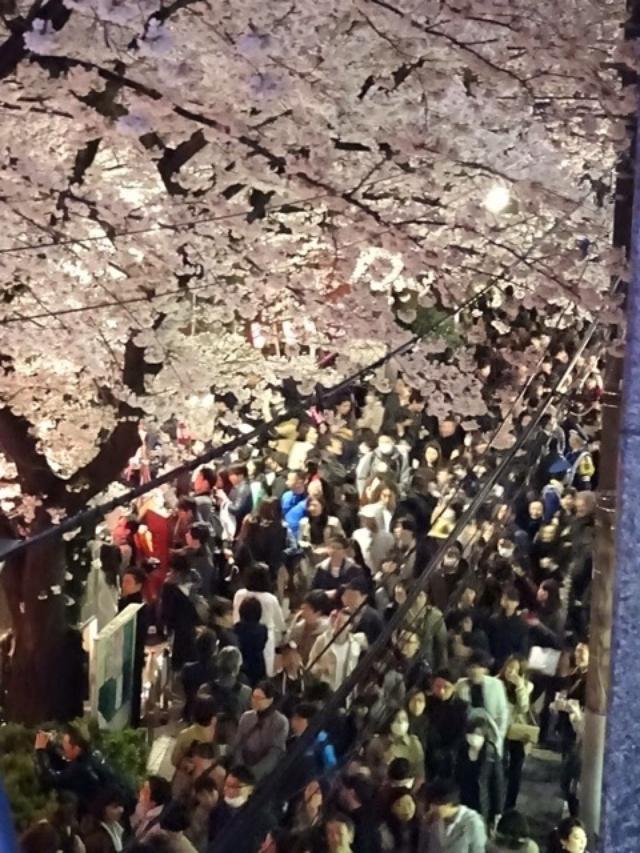画像: 驚くぞ。を体感!目黒川沿いお花見で「サントリー缶チューハイ 極キレ」
