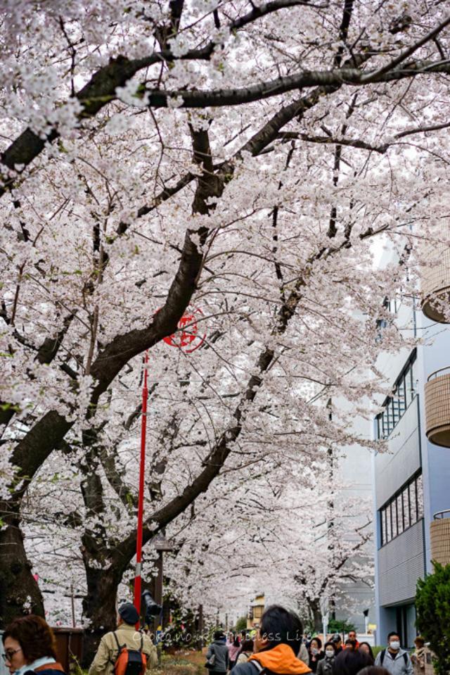 画像: KAMIYA (中目黒)花見のときこそ旨外メシにこだわろう。