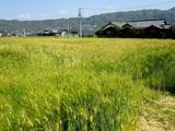 画像: JAL×はんつ遠藤コラボ企画【松山編2】1日め・蕎麦(いよ翁)