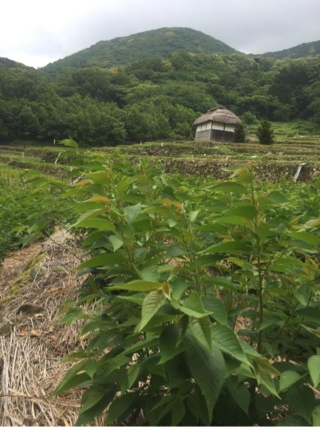 画像: 伊豆半島の宝物をたくさん訪ねました!