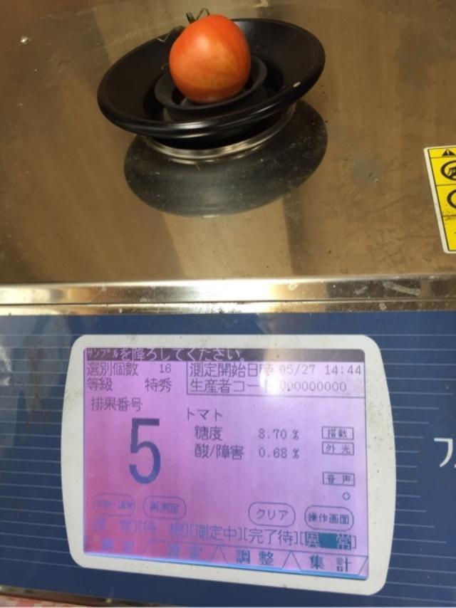 画像: トマト生産日本一の熊本県!蘇鉄園芸さんの土にこだわる潮トマト
