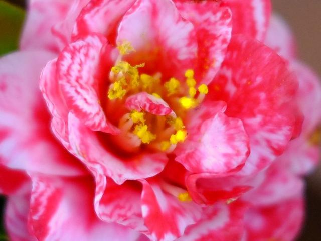 画像: 「伊豆大島うれしー旅 浜松町から東海汽船に乗って椿まつりを見に行く」