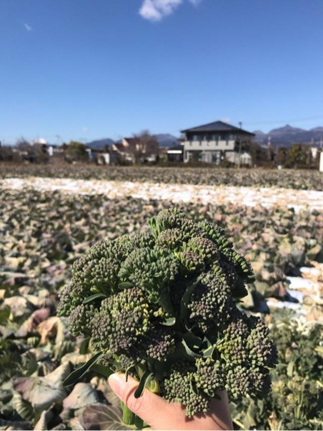 画像: ぐんま農業満喫中〜〜