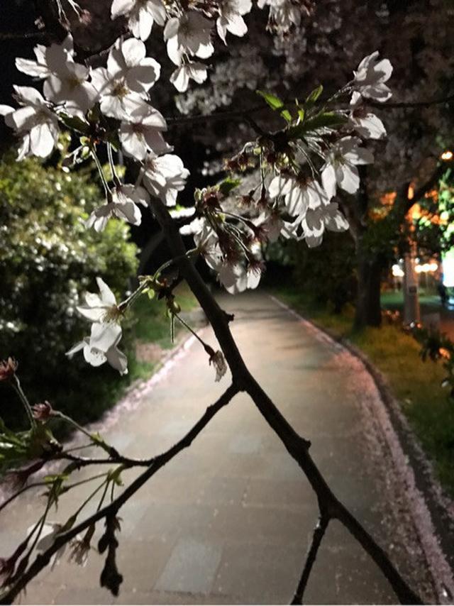 画像: 東京の桜もいいもんだ。日本農業新聞ベテランのみなさんとお花見酒〜