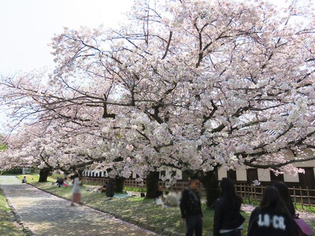画像: 【福岡】プチ花見と博多のあんバーガー♪@舞鶴公園