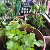 画像: ベランダ菜園生活はじまりまーす❣️
