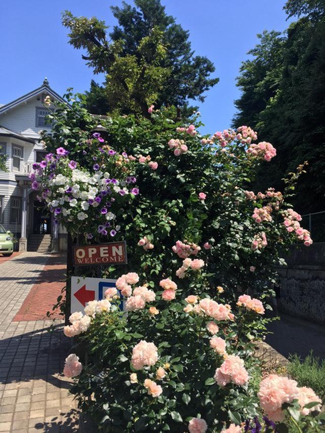 画像: 花と海❤︎アンティークホワイトの一軒家イタリアン「大磯迎賓館」