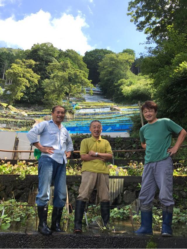 画像: 831 野菜の日!静岡 有東木のわさび田でツンカラ愛を叫びまーす